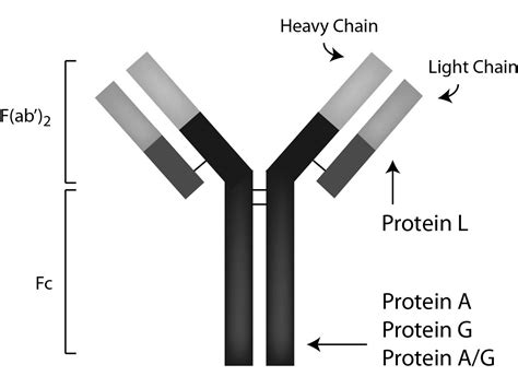protein g sepharose protein a g pag50 00 0002