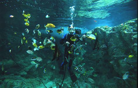 oceanopolis aquarium in brest bay domaine de moulin mer chambres d h 244 tes de charme et
