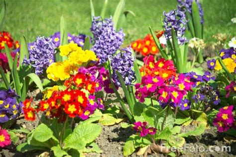 images of garden flowers flowers in a garden border pictures free use image 12 13