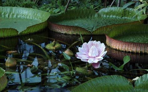 Garten In Der Schweiz by Botanischer Garten Die Sch 246 Nsten Gr 252 Nanlagen Der Schweiz