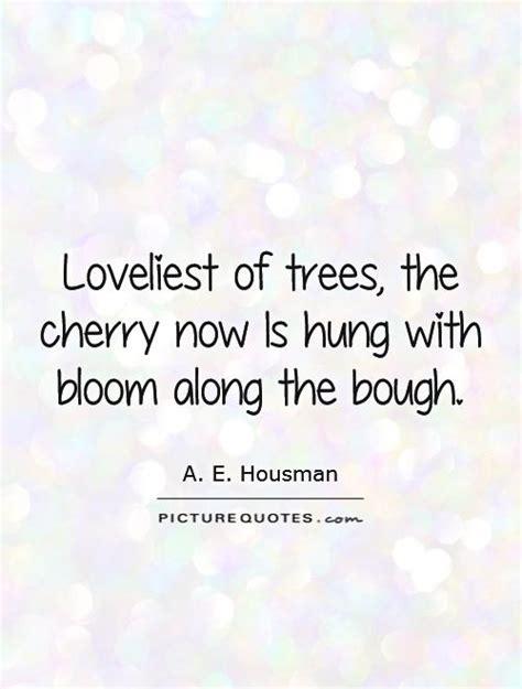 cherry tree quotes quotesgram