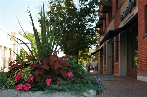 pro care landscape coloring downtown boise for nearly 30 years yelp