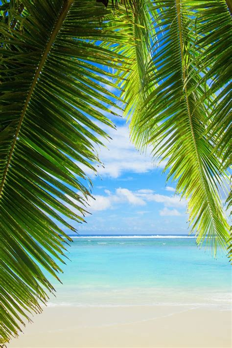 tropical tree 25 trending palm trees ideas on palms