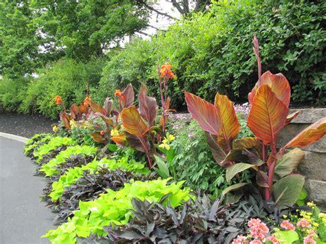 tropical landscaping ideas lovable tropical garden ideas adelaide and tropical garden