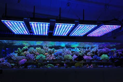 aquarium led lights aquarium led lighting photos reef and planted aquarium