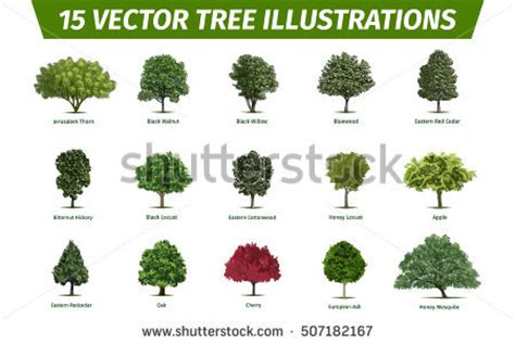 name of the tree different tree sorts names illustrations tree stock vector