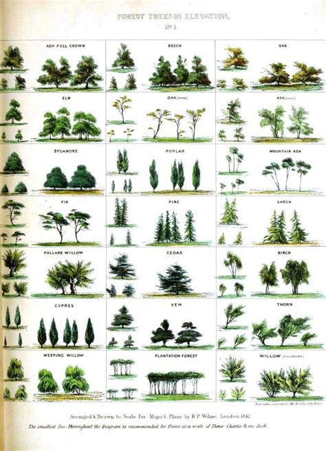 popular types of trees 25 best ideas about tree identification on