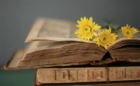 flower picture book style book book pages flower yellow background wallpaper