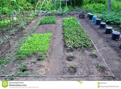 community vegetable garden community vegetable garden stock photo image 49073425
