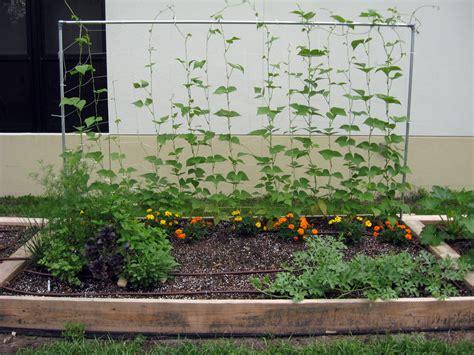 what to plant in raised vegetable garden raised bed gardening hillsborough extension garden