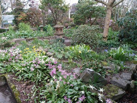 scottish rock garden scottish rock garden club