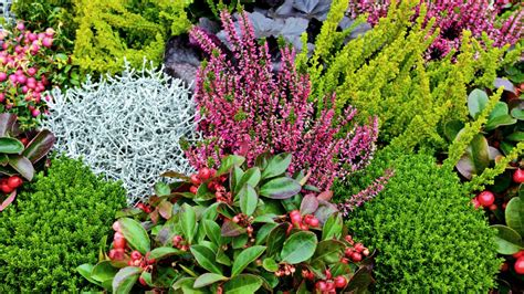 Der Garten Erde Mediathek by K 252 Bel Und Balkonk 228 Sten Herbstlich Bepflanzen Ndr De