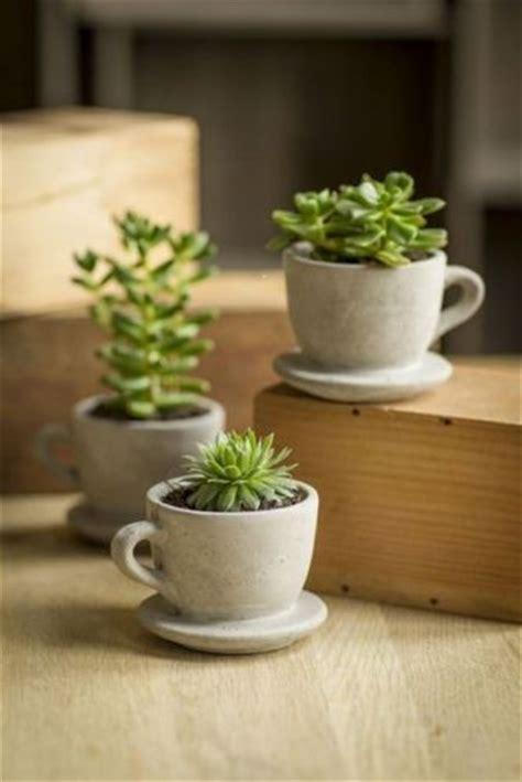plante plantes cactus cact 233 es cact 233 e tasse mug planter dans une tasse d 233 co astuce d 233 co
