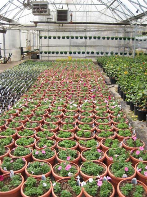 lowes garden center flowers lowes garden center flowers at lowe s garden center