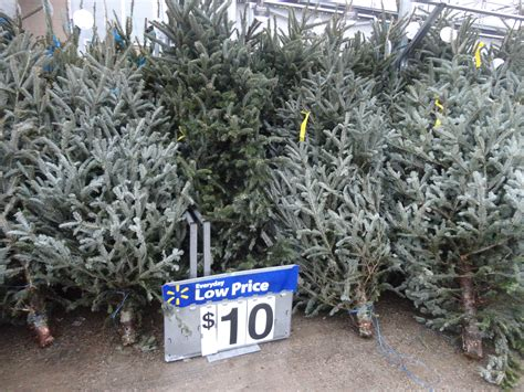 walmart fresh trees how much are fresh trees 28 images fruit and