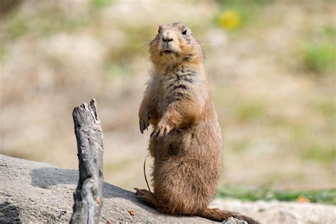 groundhog day plot groundhog day supply chain shaman