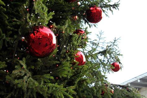 large outdoor tree ornaments awesome outdoor ornaments balls