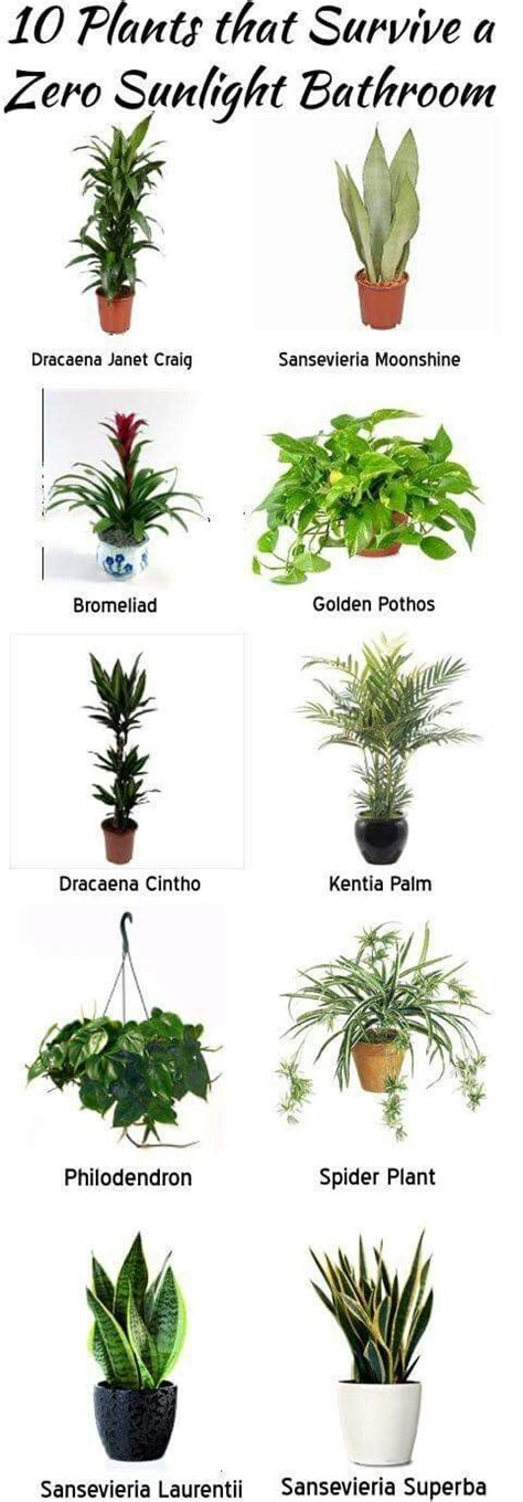 indoor plants no light 1000 ideas about indoor plant decor on plant