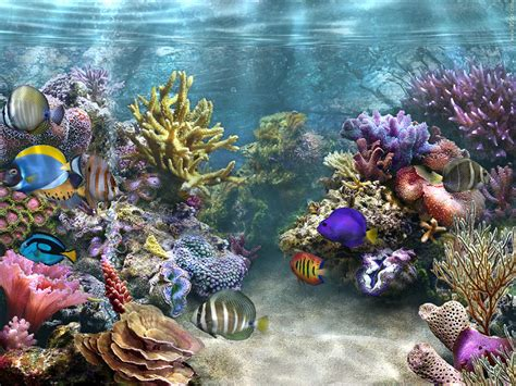 cherche fond 233 cran aquarium vivant gratuit