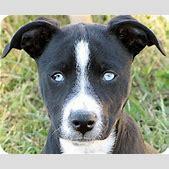 Bella   Adopted...