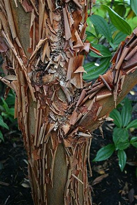 1000 images about tree bark on