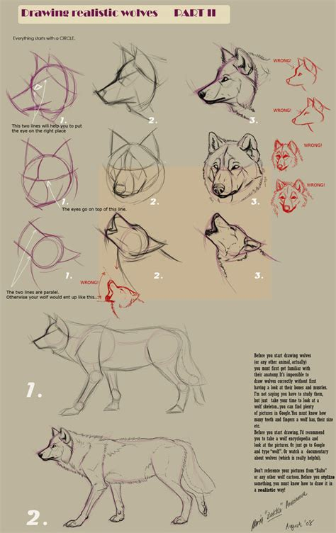 how to draw guide guides to drawing wolves