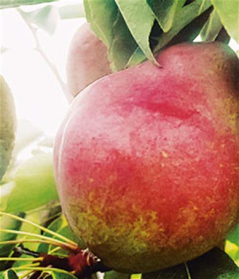 Der Hessische Obst Und Gartenbau by Unser Garten Verlag Birnen Im Garten