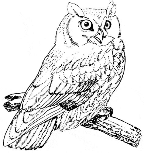screech owl coloring page animals town free screech