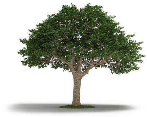 tree of tree neem tree 3d model cgtrader