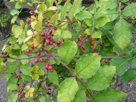 Der Garten Wien 2 by Botanische Spaziergaenge At Thema Anzeigen 02 10 2013