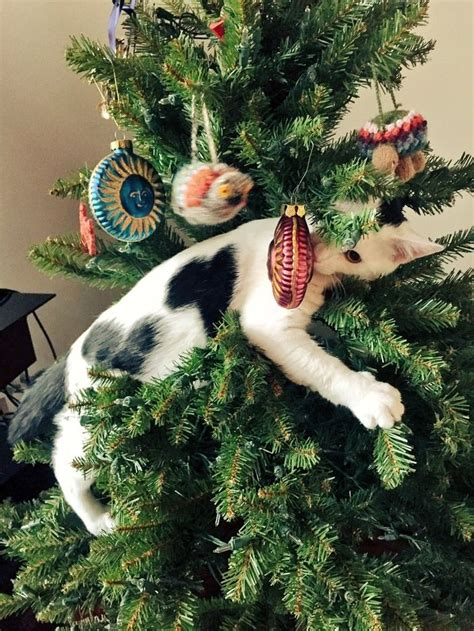tree with cats best 25 cats ideas on