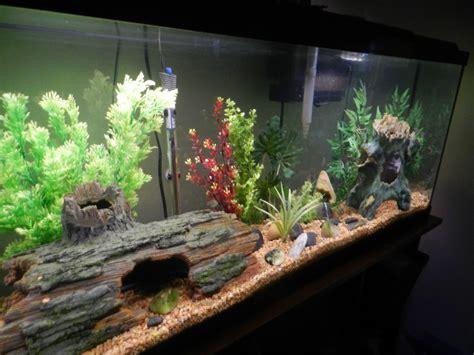 10 gallon fish tank maintenance decoration ideas 2017 fish tank maintenance