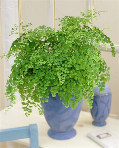 mejores plantas de interior las 17 mejores plantas de interior gu 237 a de jardiner 237 a