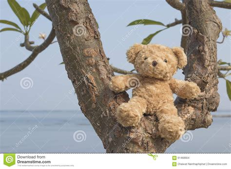 teddy tree 28 images personalised teddy tree