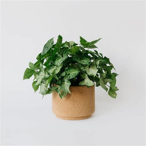 large indoor planter best 25 large indoor planters ideas on large
