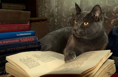 cat picture books 19 cats reading books