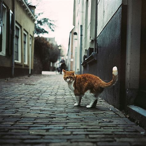 alley cat alley cat quot why do you follow me quot rolleiflex 3 5f