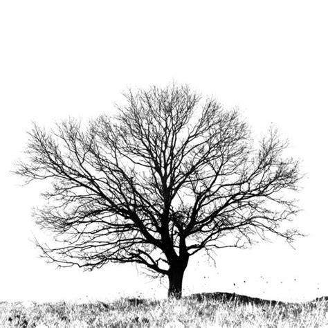 black and white tree black and white tree print black and white tree