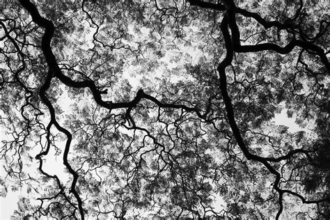 black and white tree black and white trees new calendar template site