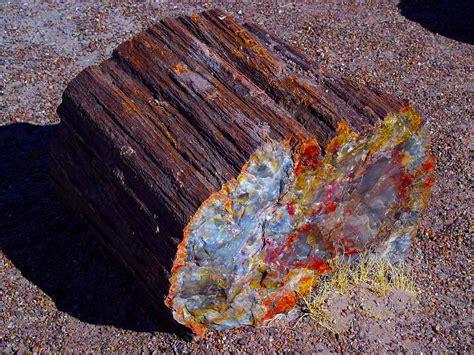 petrified wood beautiful petrified wood makes great jewelry discount