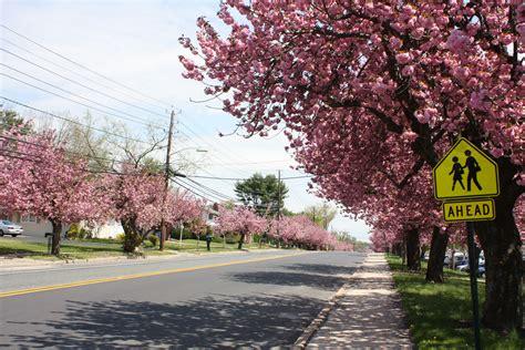 6 cherry tree cherry hill nj cherry hill township nj