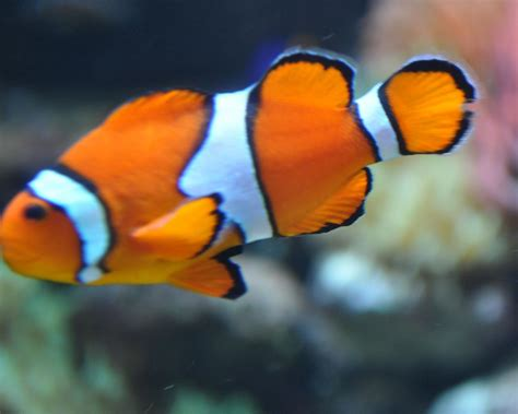 pictures of pictures of fish collection for free