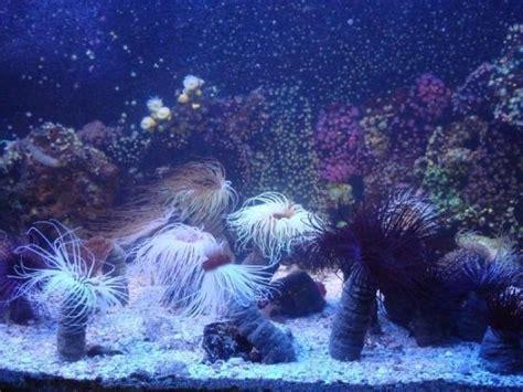 grand aquarium malo on tripadvisor hours