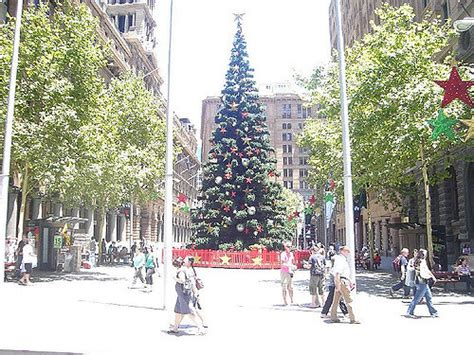 martin place tree lighting what to do in sydney aussie working