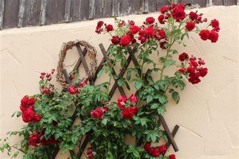 Garten Der Qualen Pdf by Qual Der Wahl Bei Roter Kletterrose Seite 1 Rund Um