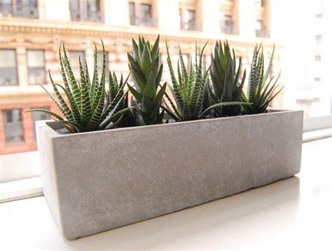 modern indoor planters lushmodern cactus garden cement planter modern