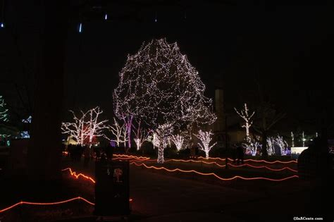toledo zoo lights hours toledo zoo lights revisited inacents