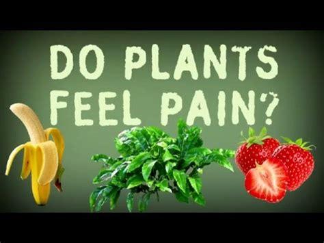 do feel do plants feel