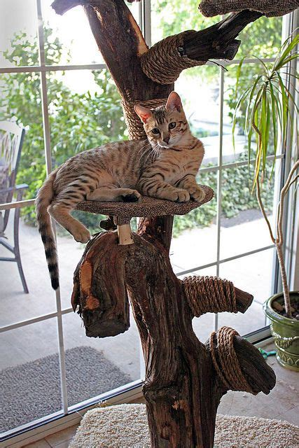 tree for cats 25 best ideas about cat trees on cat