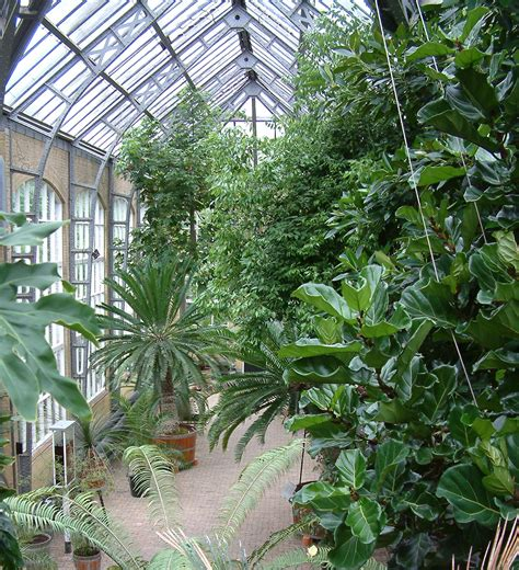 amsterdam botanical garden bagging botanic gardens polypompholyx